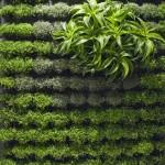 Вертикална градина обикновено се използва на всяка - 134383536696526